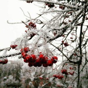 11月に入って初雪